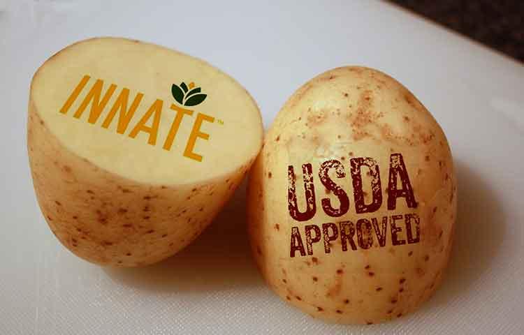 GMO innate potato