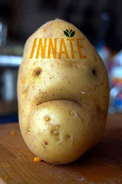 innate potato