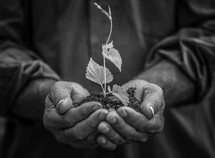 farming_wellnesswarrior