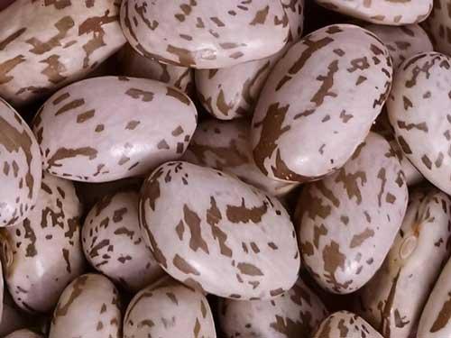 pinto beans benefits